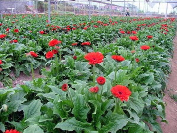 花卉批发市场