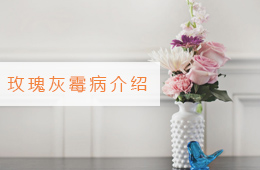 斗南万博app下载最新版批发市场